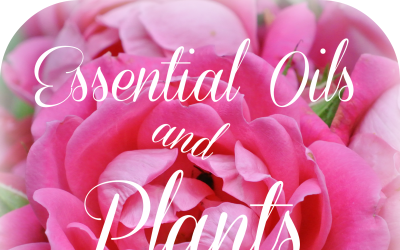 4 Ways Plants are Grown for Essential Oils