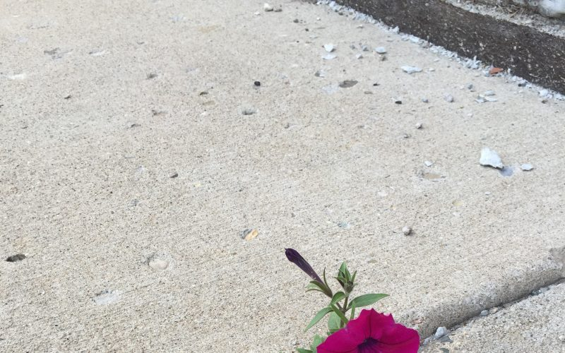 Blooming in the Cracks of Life: Sacred Everyday